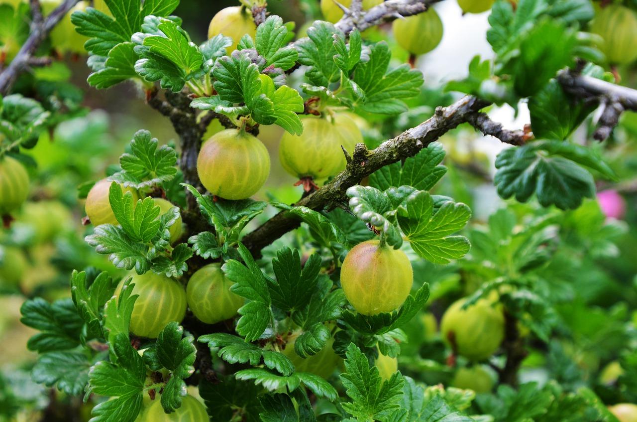Jest wniosek do UOKiK w sprawie niskich cen owoców miękkich