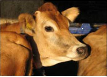 Rolnik na kwarantannie – co ze zwierzętami?