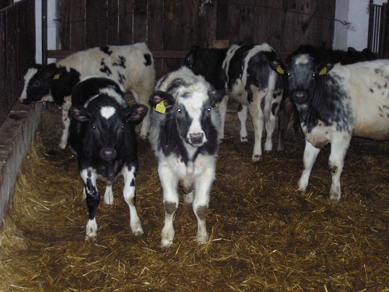 Ubój zwierząt w gospodarstwie w celu produkcji mięsa na własny użytek