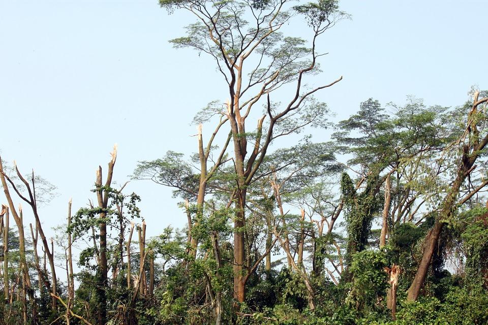 MRiRW na temat pomocy dla rolników - właścicieli lasów