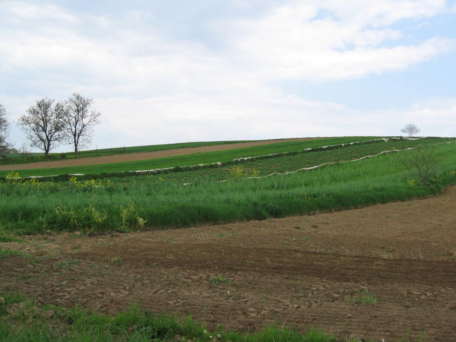 Uwagi do nowelizacji ustawy o kształtowaniu ustroju rolnego