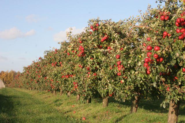 Wsparcie rynku owoców