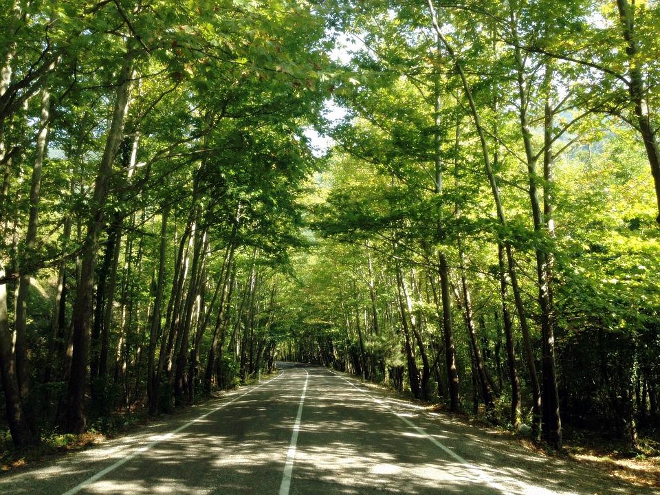 Wymagania dobrej praktyki w zakresie gospodarki leśnej