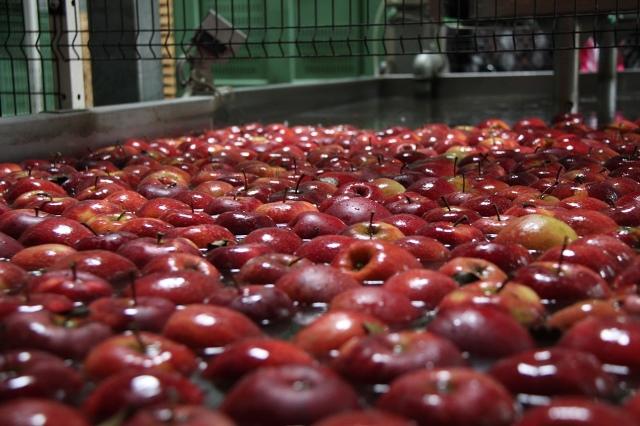 Pomoc dla producentów owoców - zmiana rozporzdzenia