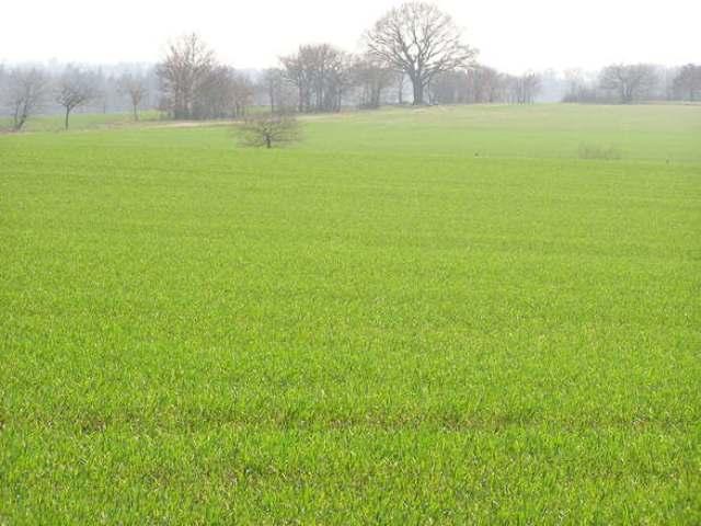 Wniosek KRIR w sprawie jednoznacznego przyznawania dopłat rolnikom faktycznie uprawiającym grunty rolne