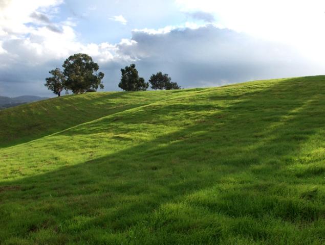 Stosowanie środków ochrony roślin na obszarach EFA być może po 2020 r.