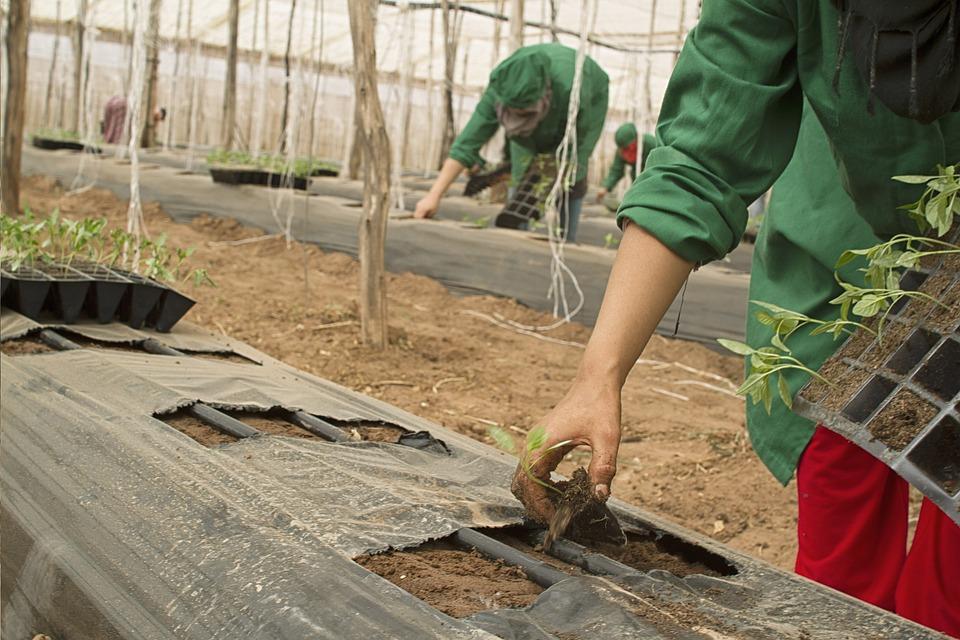 Konieczne pilne przepisy o pomocnikach rolników