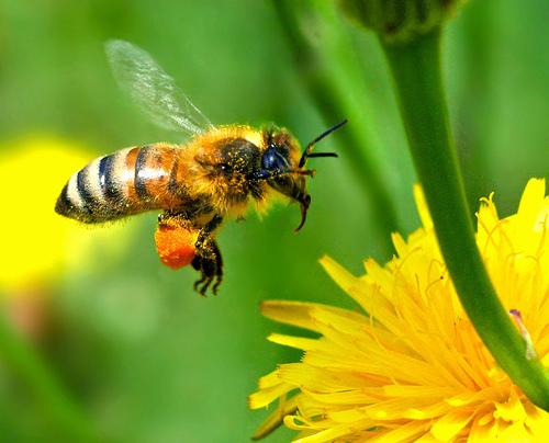 KRIR wspiera polskie pszczoły