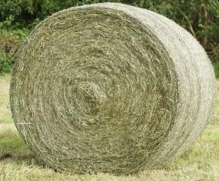 Wniosek o częstsze koszenie na paszę łąk na torfowiskach