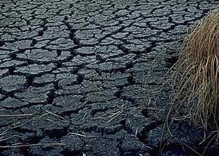 Plan przeciwdziałania skutkom suszy - ruszyły konsultacje