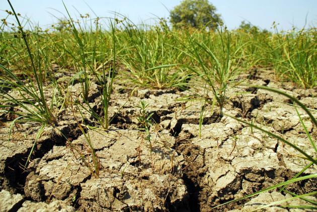Informacja MRiRW o stratach w rolnictwie spowodowanych suszą