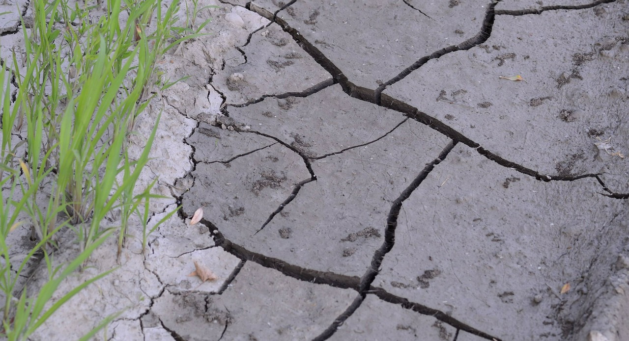 Plany zapobiegania skutkom suszy