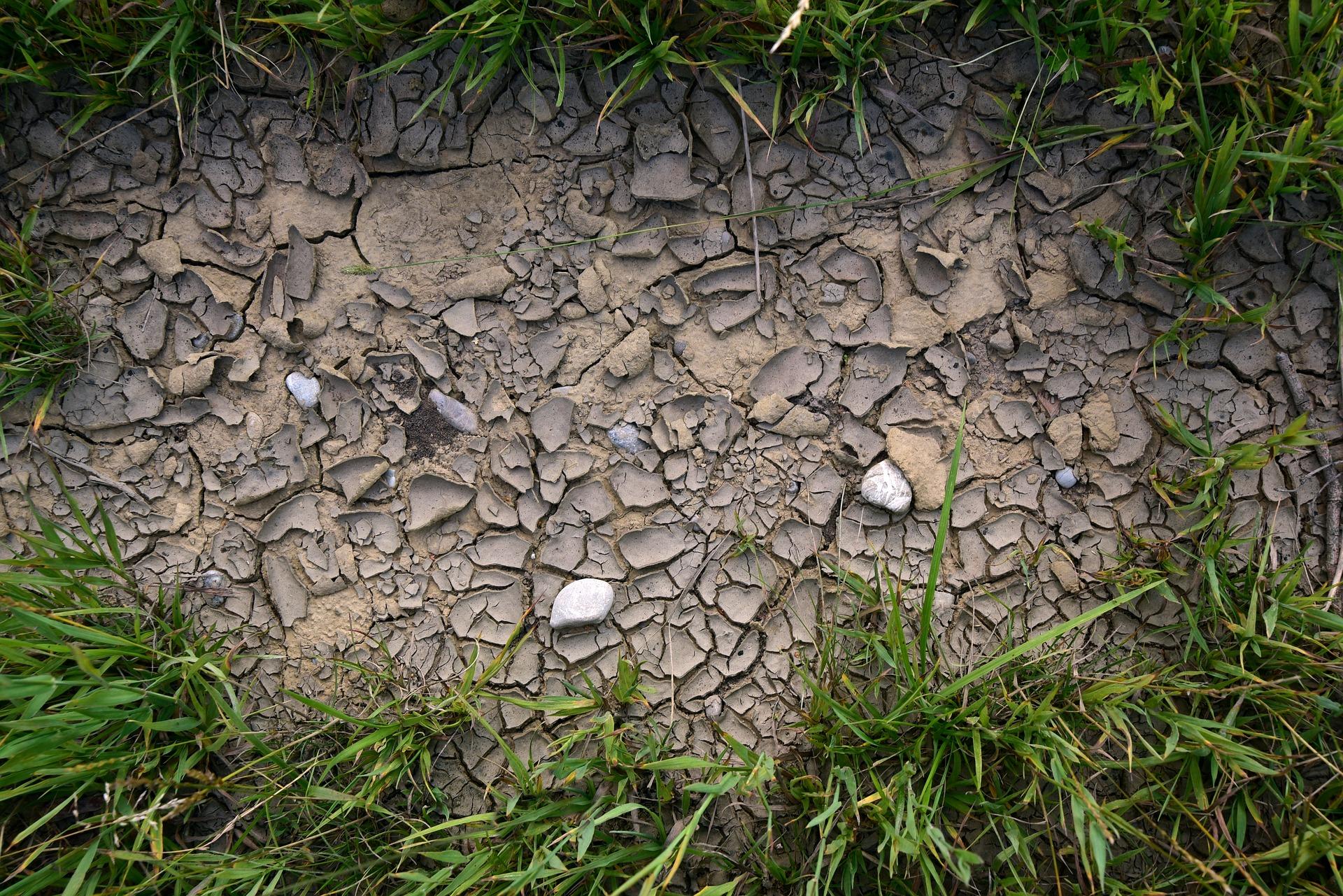 Wniosek o uznanie ubezpieczeń zawartych po 1 kwietnia br. przy ubieganiu się o pomoc suszową