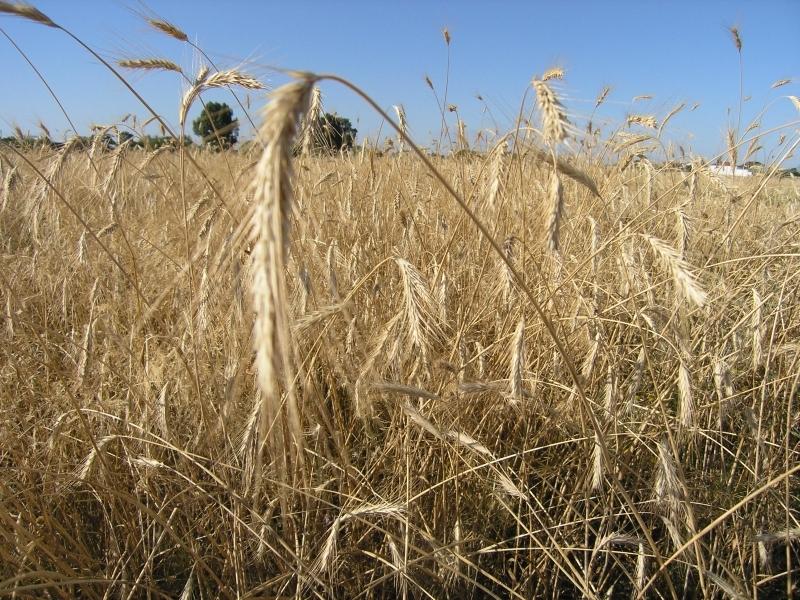 MRiRW na temat przepisów ustawy o ochronie prawnej odmian roślin