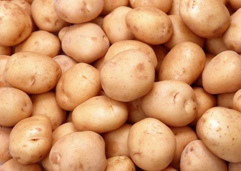 Konieczne uwolnienie producentów ziemniaków od dodatkowych procedur fitosanitarnych przy eksporcie