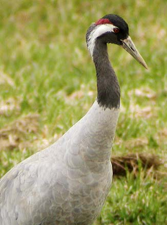 Odszkodowania za szkody powodowane przez ptaki?